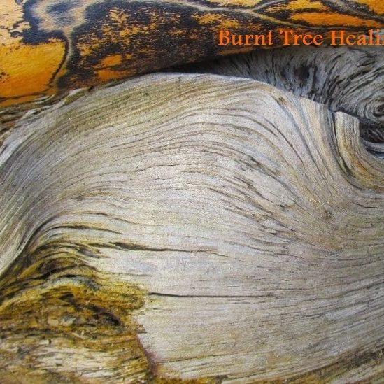 Burnt Tree Healings