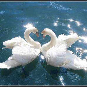 Peace Harmony and Joy