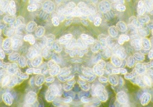 dewdrops-website.jpg