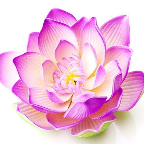 Aura Rose Holistic Therapies