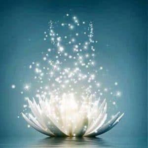 lotus-explosion