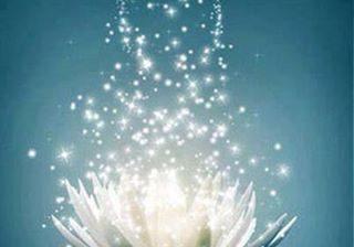 lotus-explosion.jpg